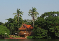 1oct2005_coconuttree2