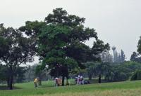 Golf_2dec2005