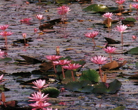 Lotus3_5nov2005_2