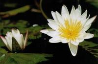 Lotus4_6nov2005