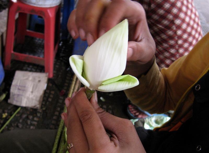 26sept2006_lotus2